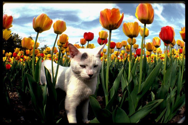 Il gatto botanico immagine stock