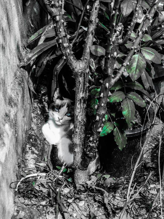 il gatto che riposa al monello più successivamente assomiglia a he' s nelle piante fotografie stock