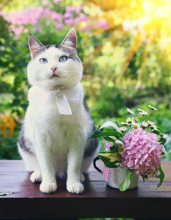 Il gatto con il mazzo nel bello carden vicino su fotografia stock libera da diritti