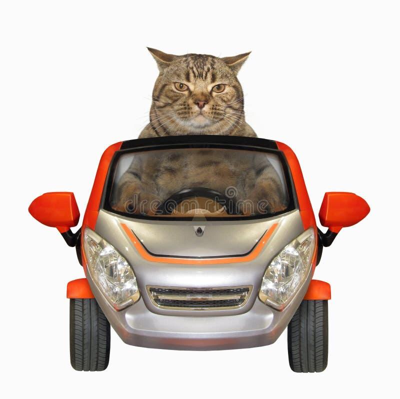 Il gatto conduce una piccola automobile fotografia stock