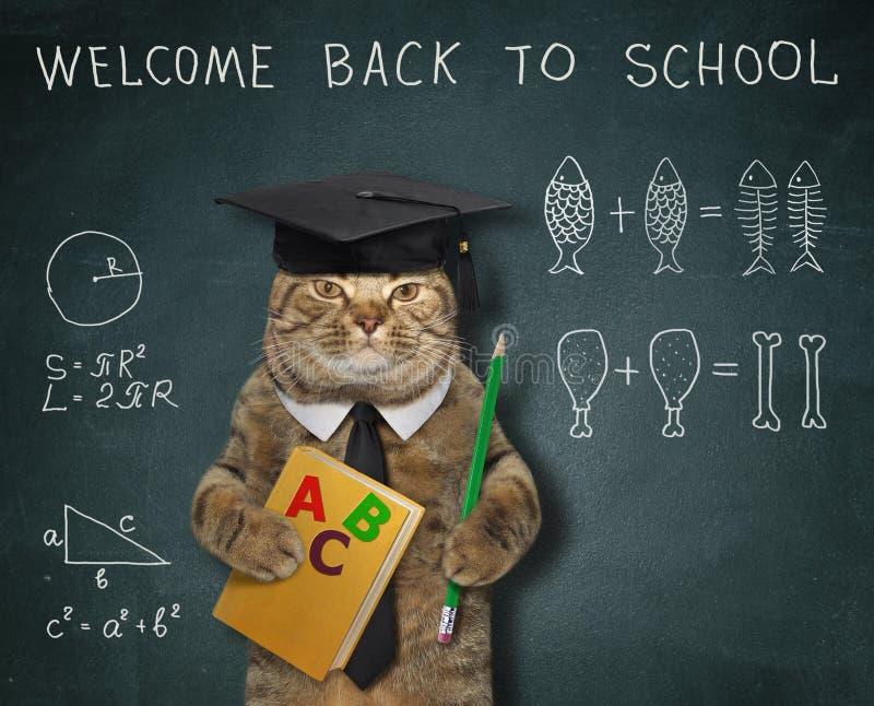 Il gatto dà una lezione di per la matematica immagini stock