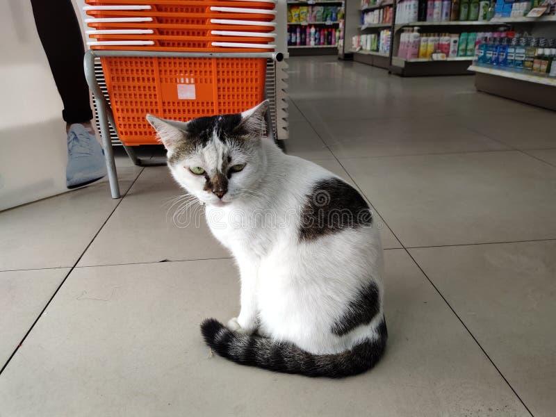 Il gatto del negozio di alimentari immagini stock