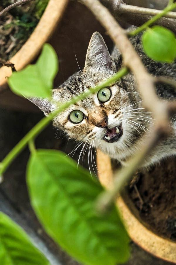 Il gatto della via fotografie stock