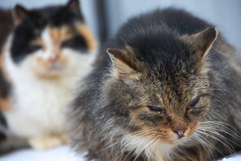 Il gatto della via con la ferita osserva la seduta sulla via fotografia stock