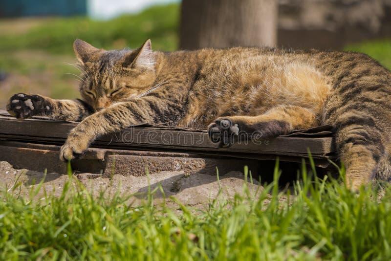 Il gatto della via sta riposando un giorno soleggiato caldo fotografia stock