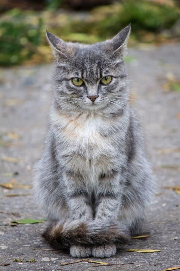 Il gatto della via svogliatamente esamina la macchina fotografica fotografie stock