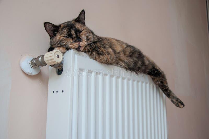 Il gatto di Brown si trova sulla batteria ad un giorno freddo fotografie stock libere da diritti