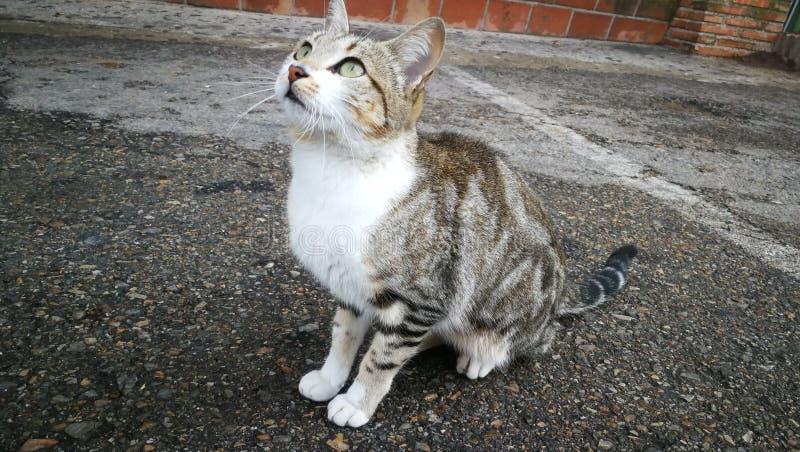 Il gatto di previsione fotografia stock