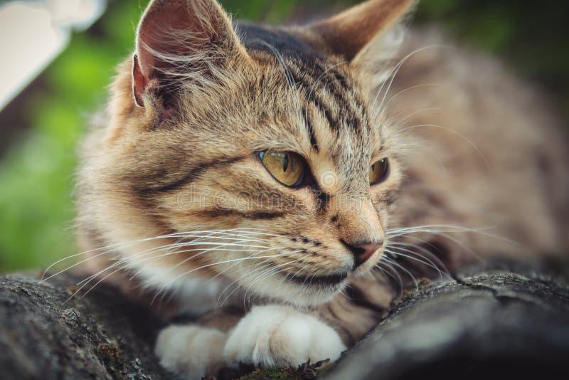 Il gatto di soriano colorato sta trovandosi su un vecchio tetto fotografia stock
