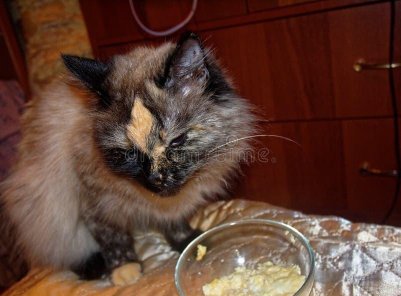 Il gatto di travestimento di Neva sta mangiando da una ciotola trasparente fotografia stock