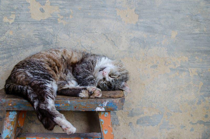 Il gatto dorme su un banco fotografia stock libera da diritti