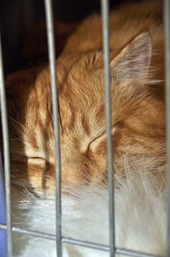 Il gatto dorme in una gabbia fotografie stock