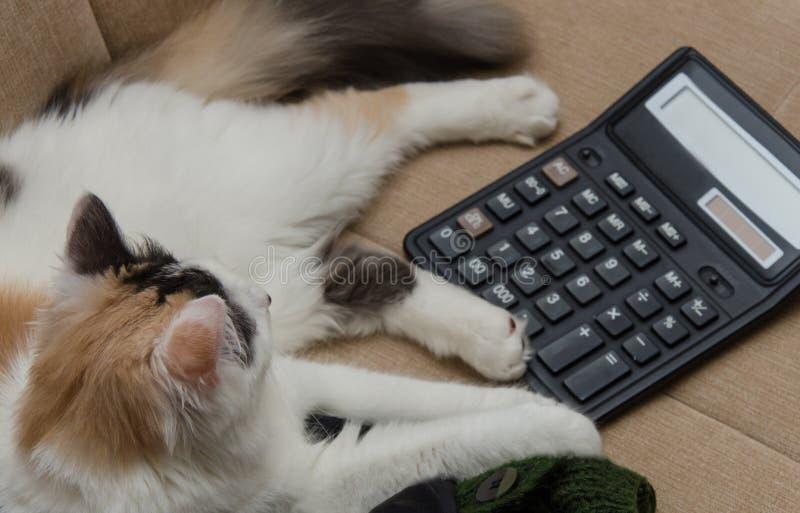 Il gatto e calcola immagini stock