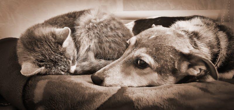Il gatto e un cane si trovano insieme e riposano, friends_ animale immagine stock libera da diritti