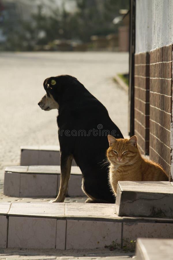 Il gatto ed il cane prendono un certo sole dell'inverno immagine stock libera da diritti