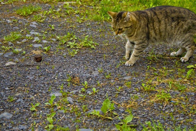 Il gatto ed il topo stanno guardando immagini stock