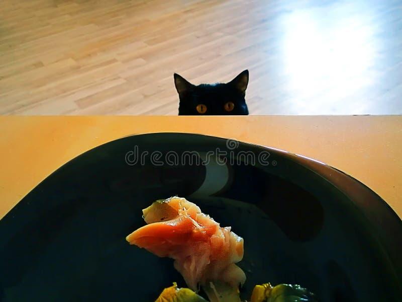 il gatto esamina il pesce sulla banda nera sulla tavola immagini stock libere da diritti