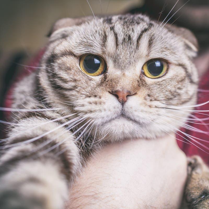 Il gatto fa il selfie immagini stock