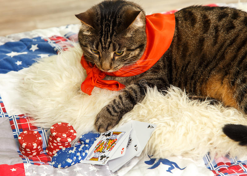 Il gatto gioca il poker fotografia stock libera da diritti