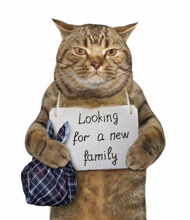 Il gatto ha bisogno di nuova famiglia fotografia stock