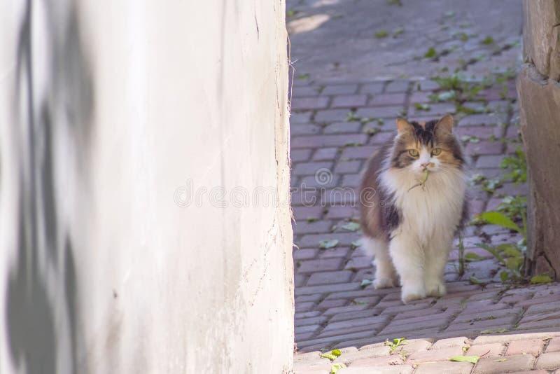 Il gatto ha preso una lucertola Il mondo dei gatti Un gattino e una lucertola Il gattino è un predatore Il cacciatore, cacciatore immagine stock libera da diritti