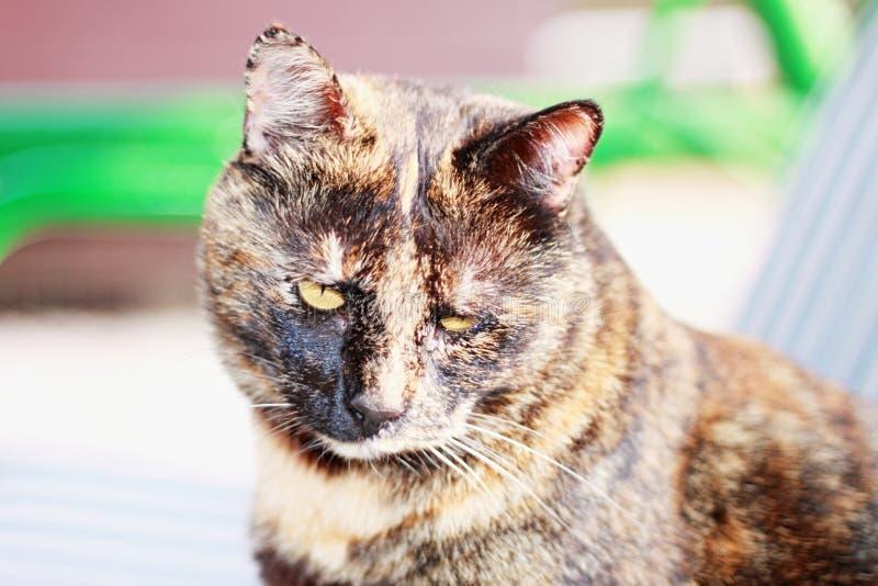 Il gatto ibrido smarrito può essere visto chiaramente dal fronte che la vita sulla via non è facile immagini stock libere da diritti