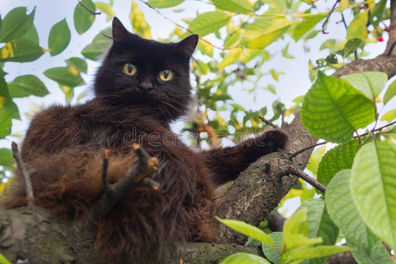 Il gatto lanuginoso nero sta sedendosi su un albero immagine stock