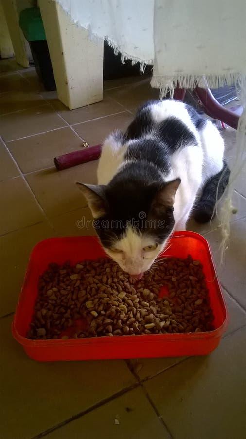 Il gatto macchiato fotografie stock libere da diritti