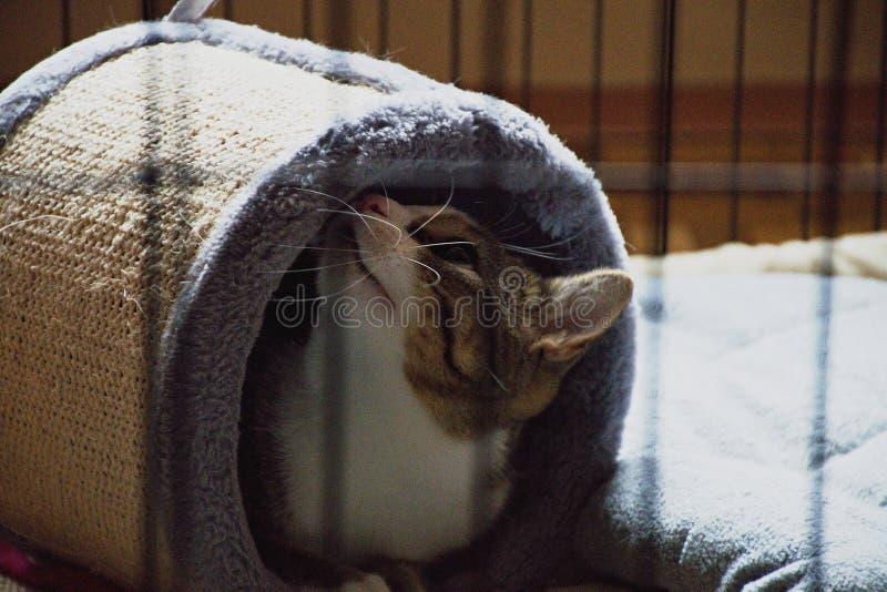 Il gatto nella gabbia fotografia stock