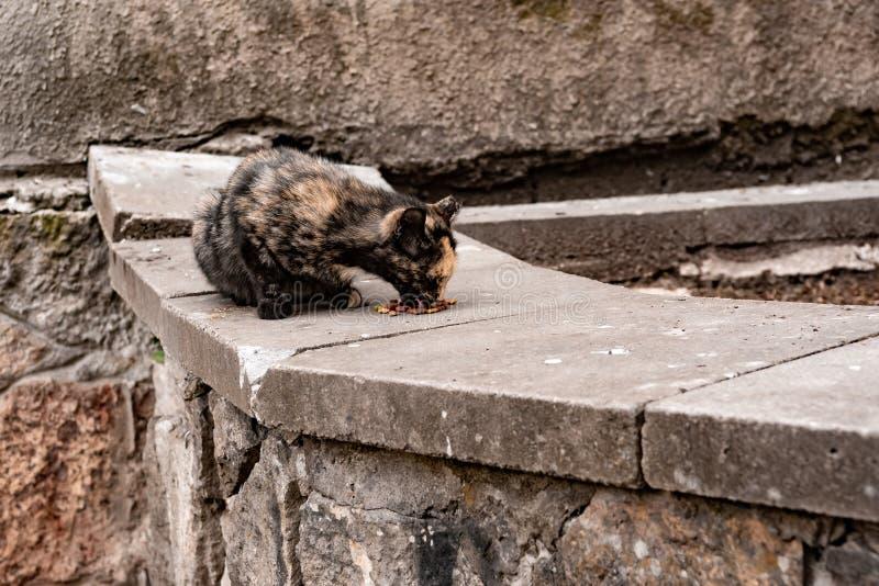 Il gatto nero e rosso sottile mangia fotografia stock libera da diritti