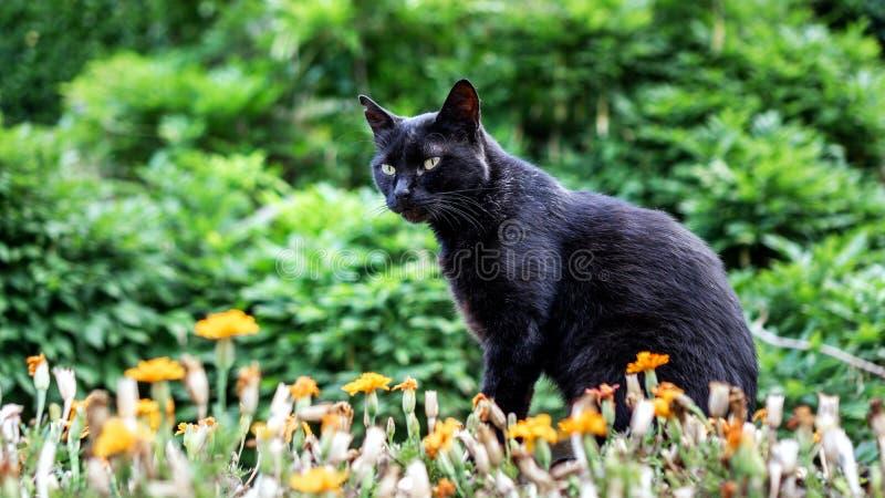 Il gatto nero si siede in mezzo di pianta, fiori e esamina la distanza fotografia stock