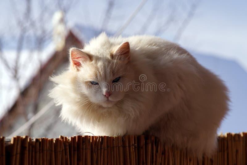 Il gatto prende il sole nell'inverno al sole immagini stock libere da diritti