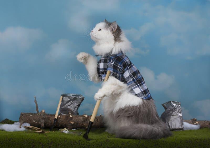 Il gatto pulisce l'anno scorso l'immondizia del ` s un giorno di molla fotografia stock