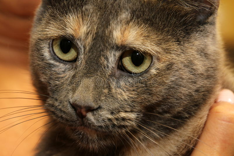 Il gatto rilassato immagine stock
