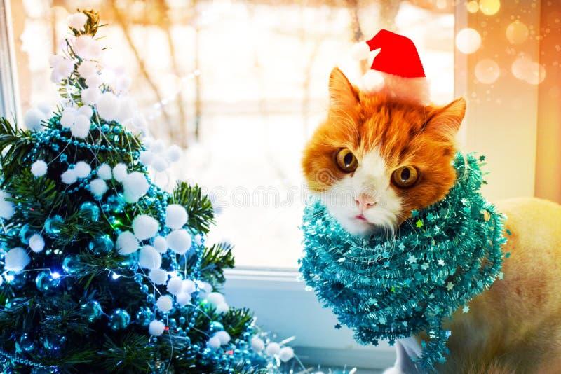 Il gatto rosso in cappuccio di Santa con lamé si siede accanto ad un albero di Natale elegante nei colori del turchese e esamina  fotografie stock libere da diritti