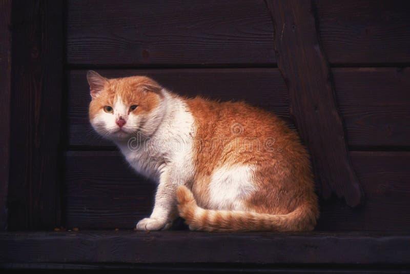 Il gatto rosso con un occhio malato sta trovandosi sull'inferriata di legno immagine stock libera da diritti