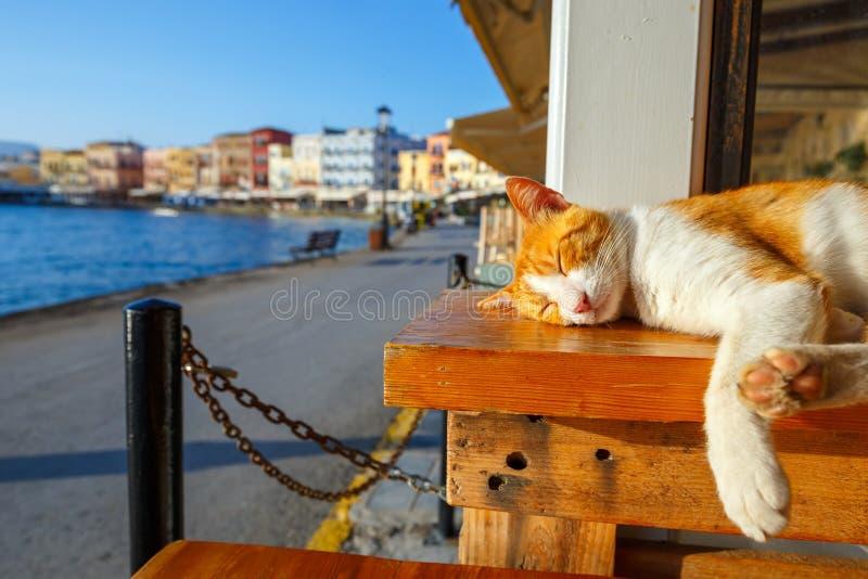 Il gatto rosso dorme su un banco immagini stock