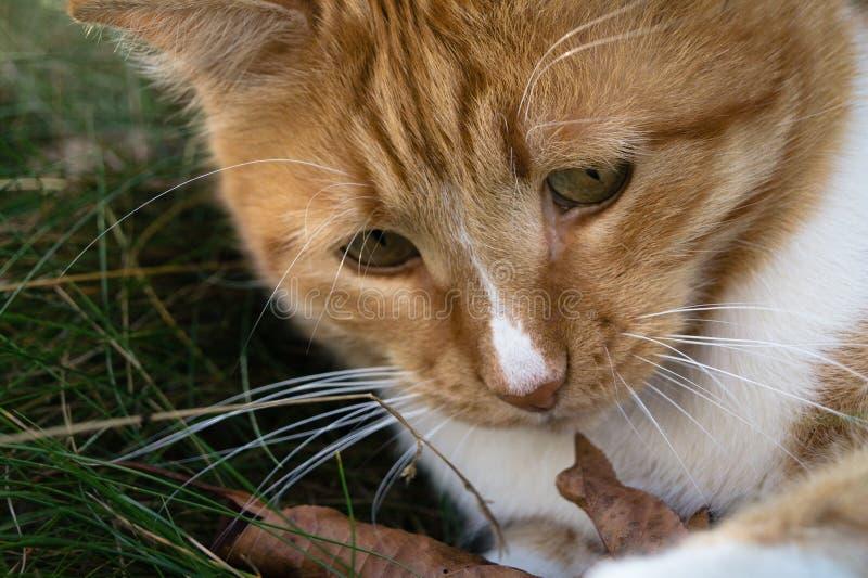 Il gatto rosso ha rend contoere che è già autunno fotografia stock libera da diritti