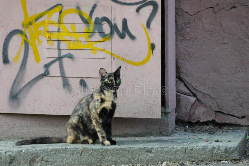 Il gatto senza tetto di misto-colore con gli occhi verdi sta sedendosi nella via fotografie stock