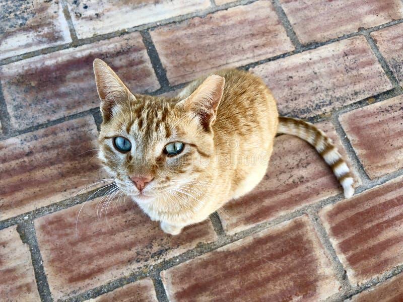 Il gatto si ? accovacciato su Boulder immagine stock libera da diritti
