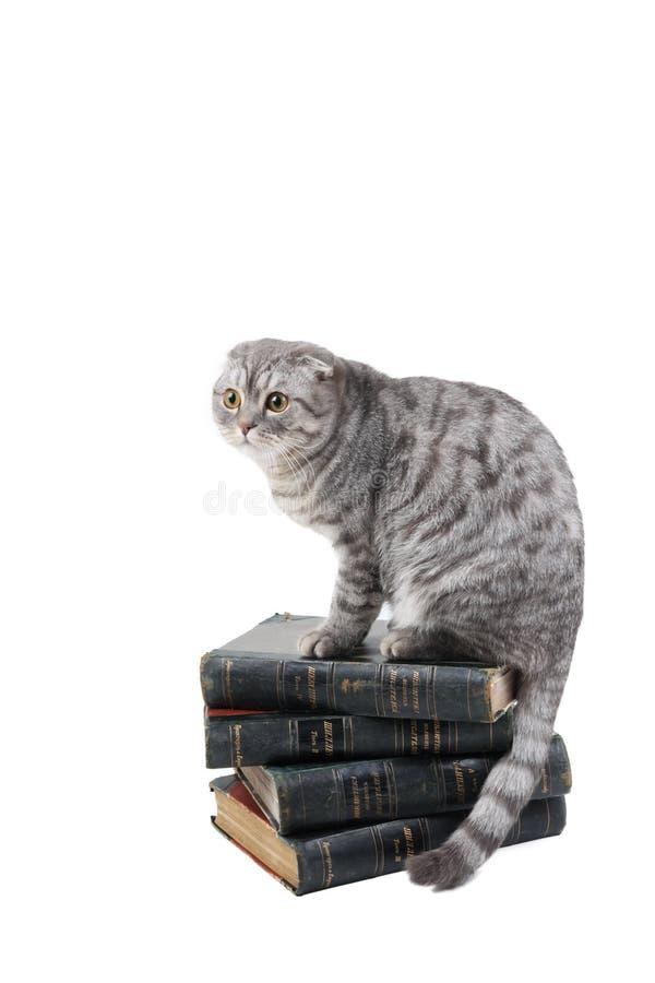 Il gatto si siede sui libri fotografia stock
