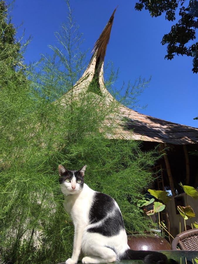 Il gatto si siede sulla tavola davanti al padiglione di bambù operato immagini stock libere da diritti