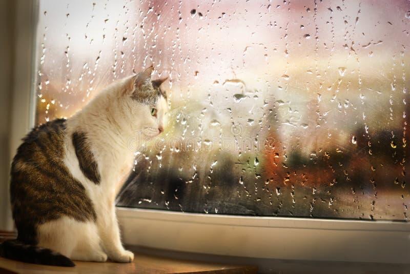 Il gatto si siede sulla via piovosa dell'orologio di davanzale sebbene la finestra coperta di gocce di pioggia immagine stock