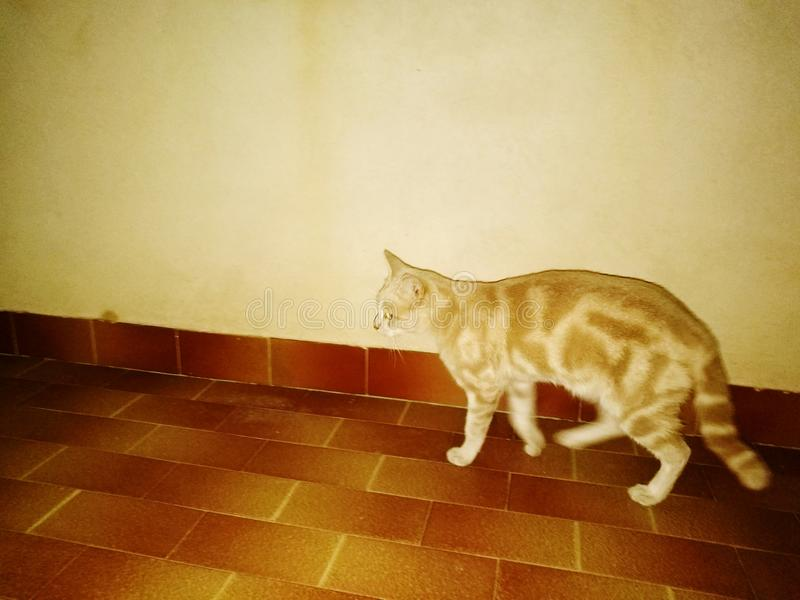 Il gatto silenzioso dell'amico immagine stock