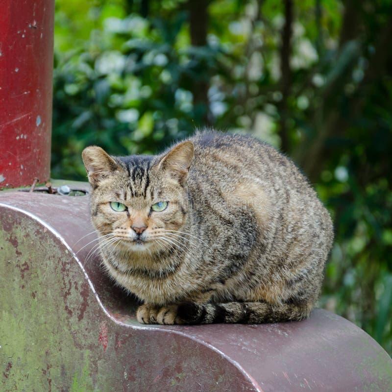 Il gatto sospettoso fissa sospettoso avanti diritto immagine stock