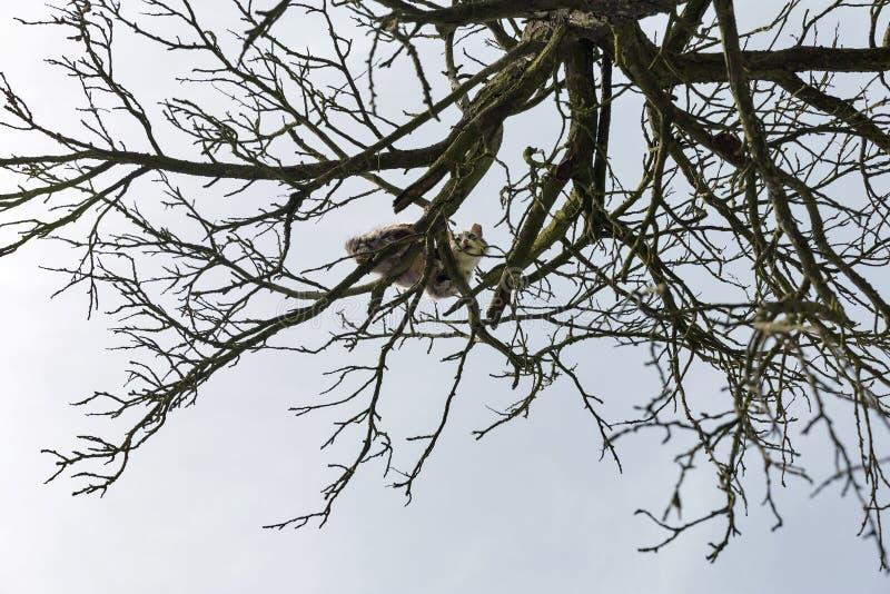 Il gatto spaventato si siede su un alto albero asciutto immagini stock