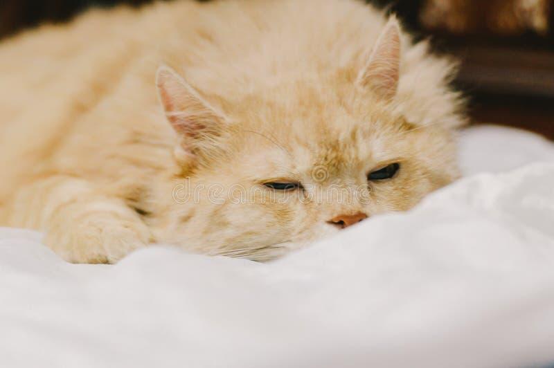 Il gatto sta andando a dormire nella sera immagine stock