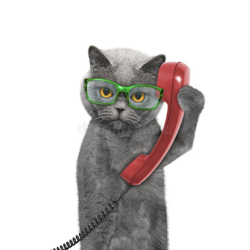 Il gatto sta discutendo a fondo il vecchio telefono fotografia stock
