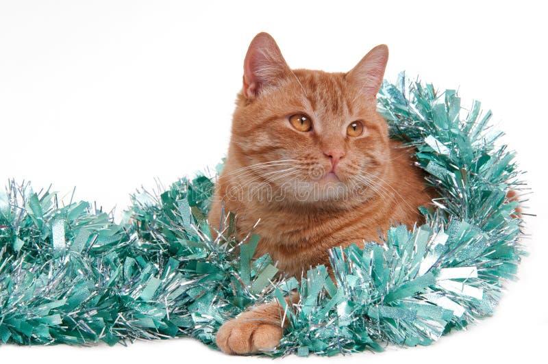 Il gatto sta giocando con le decorazioni di natale fotografia stock libera da diritti