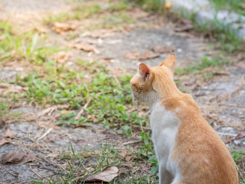 Il gatto sta sedendosi sulla terra alla luce solare fotografie stock